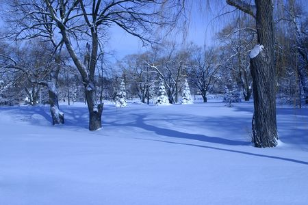 Clear winter morning with bright snow blanket - canadian urban landscape