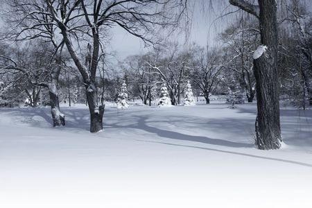 Winter park in the morning with bright snow blanket - canadian urban landscape Фото со стока