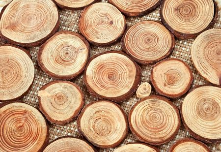 wood cut: Annual wood circles - pieces of wood with annual rings