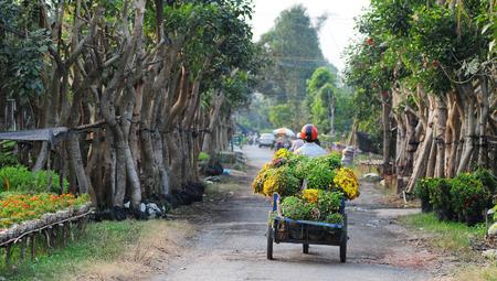 dong: DONG THAP, VIETNAM - JANUARY 14, 2014: A flowers transport motobike, prepare for Lunar New Year in Tan Quy Dong flower garden, Sa Dec Town, Vietnam.