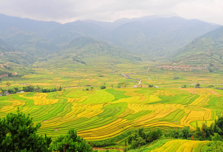 Rice fields on terraced of Sapa (Sa Pa), Vietnam. Rice fields prepared to harvest at Northwest Vietnam. photo