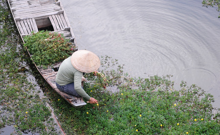 People sitting on small boat, harvesting vegetables on river in Mekong Delta, southern Vietnam. Stock Photo