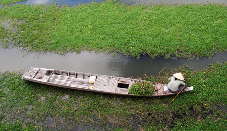 poisoned: People sitting on small boat, harvesting vegetables on river in Mekong Delta, southern Vietnam. Stock Photo