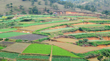tourism  city: Vegetable fields in highland, Dalat, Vietnam. Da lat is one of the best tourism city in Vietnam. Dalat city is Vietnams largest vegetable and flowers growing areas. Stock Photo