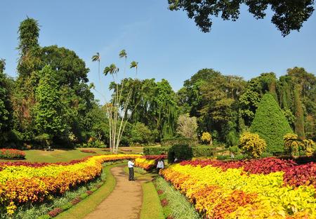 kandy: View of Botanical Garden, Kandy, Sri Lanka. Stock Photo