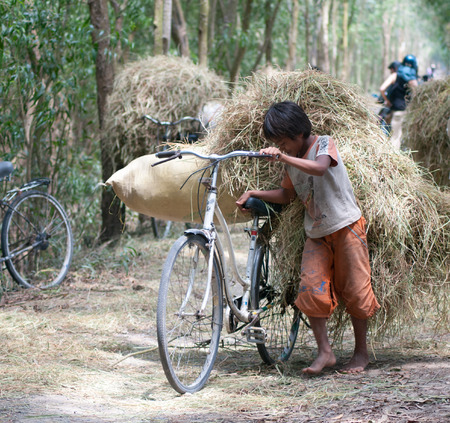 illiterate: Mekong Delta, Vietnam - Mar 12, 2011. Child labor at Asia countryside, group of unidentified children transport straw by bike from rice field, social problem at Asia poor rural, Vietnam. Editorial