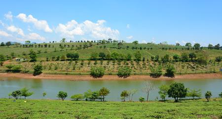 loc: Tea farm at Bao Loc highland, Vietnam. Bao Loc tea hill is the best tea growing areas of Vietnam. Stock Photo