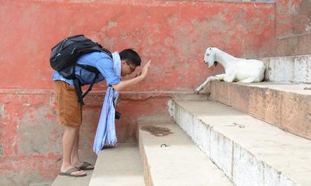 varanasi: Varanasi, India - Jul 12, 2015. An unidentified pilgrim with a goat on steps of the ghat in Varanasi, India.