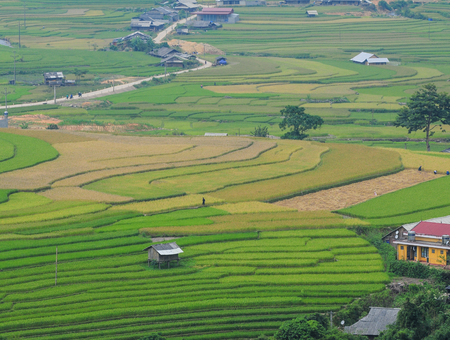 land management: Rice terrace fields in Sapa, northwest Vietnam. The fields were voted as one of seven most beautiful and impressive ones of Asia and the world.