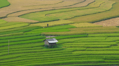 voted: Rice terrace fields in Sapa, northwest Vietnam. The fields were voted as one of seven most beautiful and impressive ones of Asia and the world.