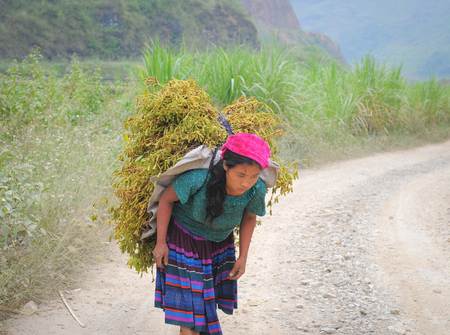 ha giang: HA GIANG, VIETNAM, OCT 20, 2015. Unidentified ethnic minority women carry grass for cows in Ha giang, Vietnam. Ha giang is a northernmost province in Vietnam.