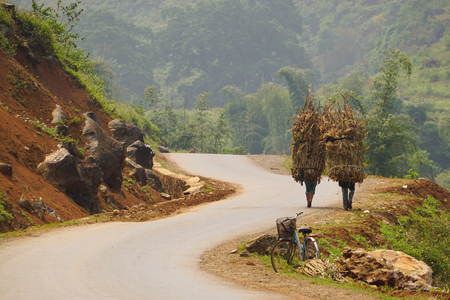 ha giang: Unidentified ethnic minority women carry grass for cows in Ha giang, Vietnam. Ha giang is a northernmost province in Vietnam.
