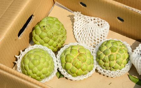 custard apples: Freshly harvested custard apples or Buddha Head fruits at a market in Taiwan.