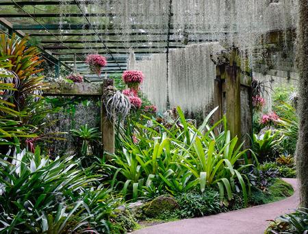 Botanic Gardens in Singapore.