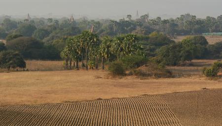 fascinate: Empty field in Bagan, Myanmar.