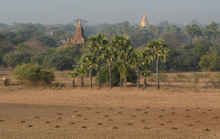 fascinate: Field with temples at sunny day in Bagan, Myanmar.