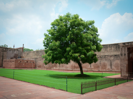 mughal empire: Agra Fort with the tree. The fort was built by the Mughals, can be more accurately described as a walled city in Agra, India.