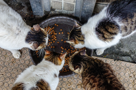 A group of cats happily enjoy food feed by tourists, in a village.