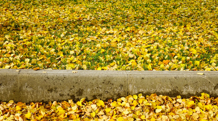 Autumn scenery with yellow leaves on the grass in the city park.