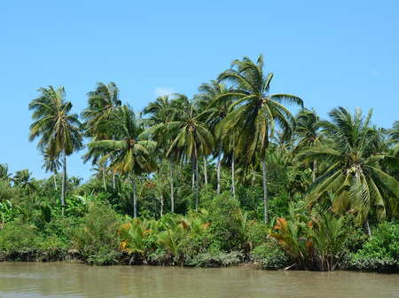 A canal lined with water coconut trees at sunny day in Mekong Delta, Vietnam. Stock Photo