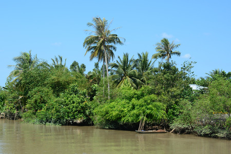 A canal lined with water coconut trees in Mekong Delta, Vietnam. Stock Photo