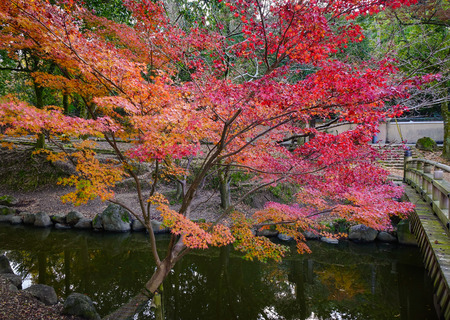 honshu: Red maple trees with pond at the autumn park in Nara, Japan. Nara is the capital of Japan's Nara Prefecture, in south-central Honshu.