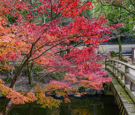 honshu: Red maple trees with wooden bridge at the autumn park in Nara, Japan. Nara is the capital of Japan's Nara Prefecture, in south-central Honshu.