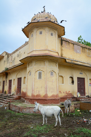 mughal empire: An old building with donkeys in Jaipur, India. Jaipur, known as the Pink city, is a major tourist destination in India.