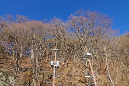 Dried tree under the blue sky with electricity column at sunny day in forest.