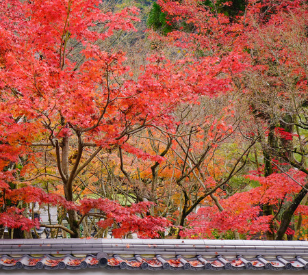 Landscape of Japanese garden at autumn in Kyoto, Japan. Kyoto contains roughly 2,000 temples and shrines. Stock Photo