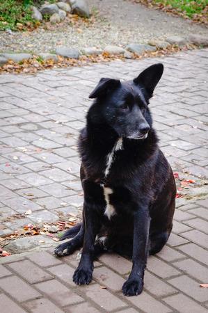 pity: Black dog sitting on stone road in Suzdal village, Vladimir, Russia.