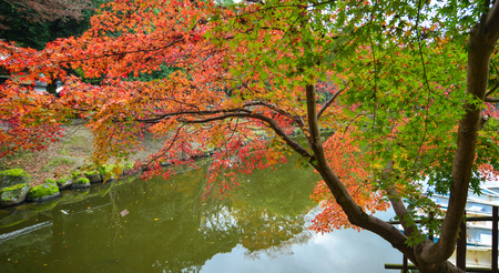 Maple trees with pond at Japanese garden at autumn in Nara, Kansai, Japan. Nara is Japans first permanent capital was established in the year 710. Stock Photo