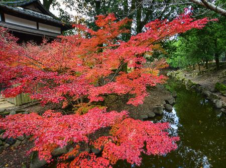 나라, 간사이, 일본에서가 일본 정원의 풍경. 나라는 일본에서 가장 보람있는 목적지 중 하나입니다. 스톡 콘텐츠