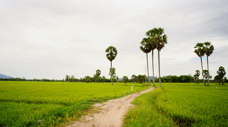 encompasses: Rice field with palm trees at rainy day in Mekong Delta, Vietnam. The Mekong delta region encompasses a large portion of southwestern Vietnam of 39,000 square kilometres. Stock Photo