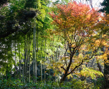 Bamboo forest at Rikugien gardens in Tokyo, Japan. Rikugien is often considered Tokyos most beautiful Japanese landscape garden. Stock Photo