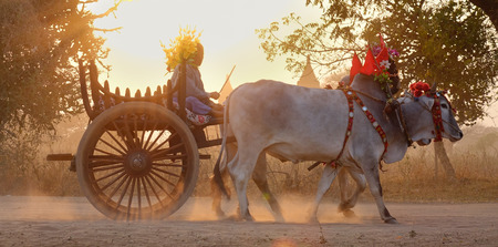 Bagan, Myanmar - Feb 19, 2016. An ox cart running on dusty road at sunset in Bagan, Myanmar. Bagan in central Burma is one of the worlds greatest archeological sites. Editorial