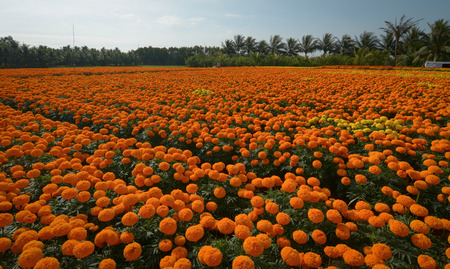 encompasses: Flower plantation at sunny day in Mekong Delta, Vietnam. The Mekong delta region encompasses a large portion of southwestern Vietnam of 39,000 square kilometres.