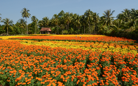 specializes: The flower plantation with a wooden house at sunny day in Sa Dec, Vietnam. Sadec District specializes in products from the Mekong River.