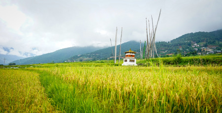dominant: Terraced farmland with paddy field at the Sopsokha village, Bhutan. Agriculture has a dominant role in Bhutans economy. Most of the population is involved in agriculture. Stock Photo