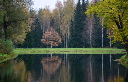 Lake scenery with the forest in Saint Petersburg, Russia. Saint Petersburg is inscribed on the UNESCO World Heritage list.
