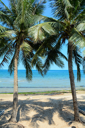 kilometres: Beautiful sea with coconut trees in Phu Quoc island, Vietnam. Phu Quoc is the largest island in Vietnam, has a total area of 574 square kilometres.
