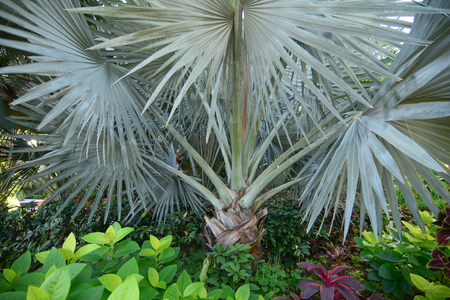 A palm tree at the park in Marina Bay, Singapore.