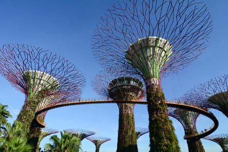 Singapore - Mar 12, 2016. Supertree Grove at the Gardens by the Bay in Singapore. The supertrees are much more than an ostentatious display of contemporary architecture. Editorial