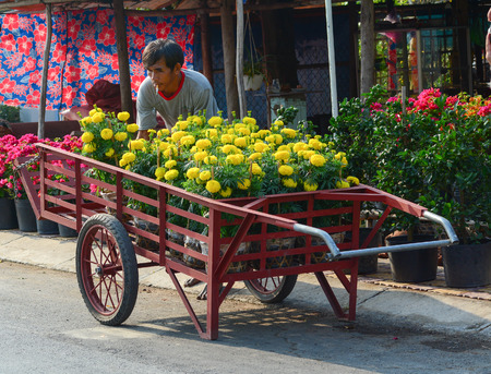 Mekong Delta, Vietnam - Jan 31, 2016. Carrying Tagetes flowers on street in Mekong Delta, Vietnam. The Mekong Delta is by far Vietnam most productive region in agriculture.