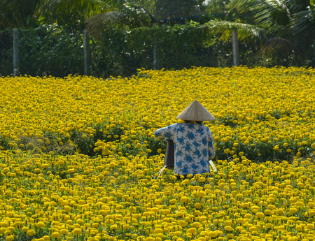 A woman working on flower plantation in Mekong Delta, Vietnam. The Mekong delta region encompasses a large portion of southwestern Vietnam of 39,000 square km.