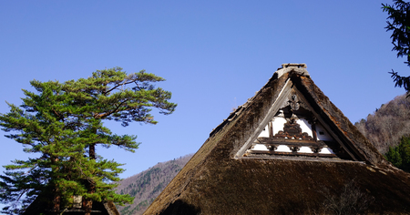 Top of a traditional house with pine trees at Historic Villages of Shirakawa-go in Gifu, Japan. Editorial