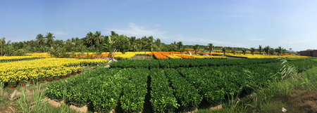 specializes: A plantation at sunny day in Sa Dec, Mekong Delta, Vietnam. Sadec District specializes in products from the Mekong River.