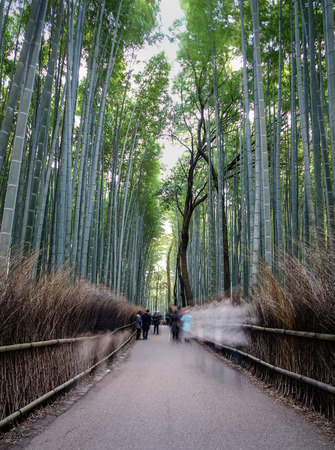 People walking at the Sagano bamboo grove at Arashiyama in Kyoto, Japan. Sagano bamboo forest is one of the most beautiful groves on Earth.