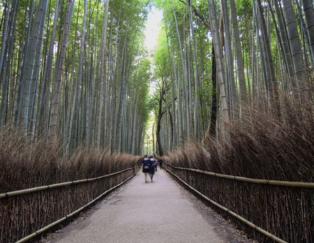 People walking at the bamboo grove at Arashiyama in Kyoto, Japan. On CNN, the bamboo grove was referred to as One of the most beautiful groves on Earth.