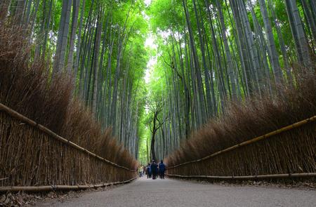 Sagano bamboo grove at Arashiyama in Kyoto, Japan. The bamboo grove is known for its rich bamboo stalks located in the Arashiyama mountains. Stock Photo